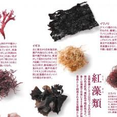 海藻のお話と今が旬の新わかめ